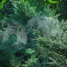 Pavučinky