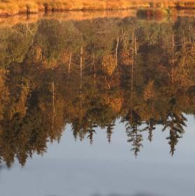 Zrcadlení Šumavy