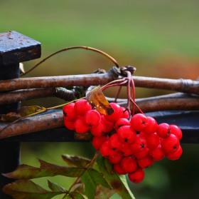 Zdraví s chutí podzimu