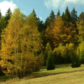 Šumava poblíž Srní