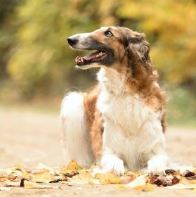 kouzlo podzimu ve psím podání ...