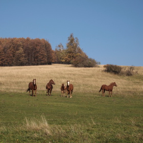 Kone pod Kobylou