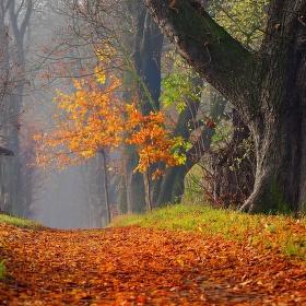 Podzimní kaštanová alej...