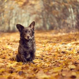 Pózovačka v listí