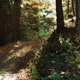 Cesta lesa