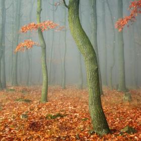 ... v lesní říši