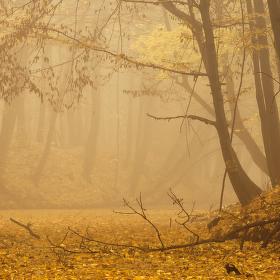 Lužní les XXXIII - Přírodní rezervace Rezavka