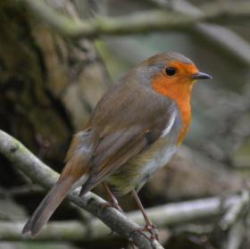 English bird in da park :D