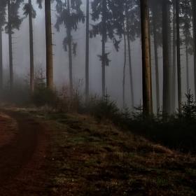 Poledne v mlžném lese