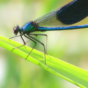 život létajícího hmyzu