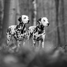 modelky v lese
