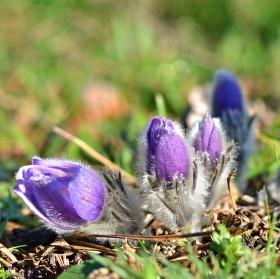 Jarní kouzlo