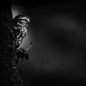 Noční lovec