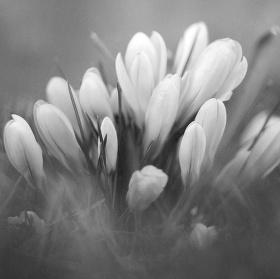 Květiny v trávě
