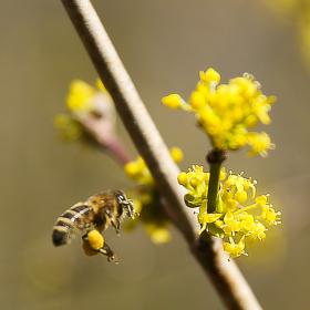 První jarní pučení květů