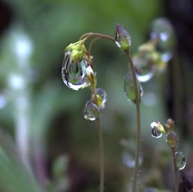 Focení v dešti