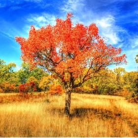 stromovka pod Oblíkem