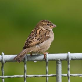 Návštěva na plotě