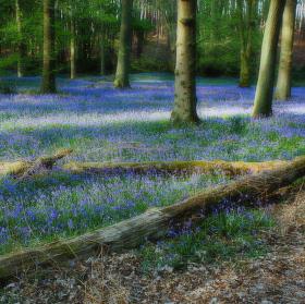 Jaro v Anglii