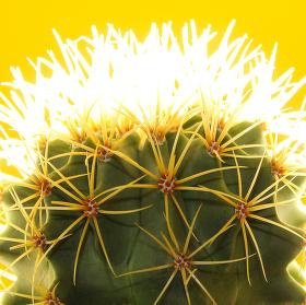 Kaktus tak trochu jinak.......
