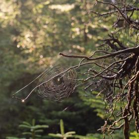 Dobré ráno lese