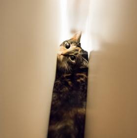 Kočičák