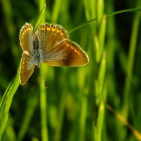 Motýl na stéble 2