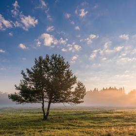 Ráno na Šumavě