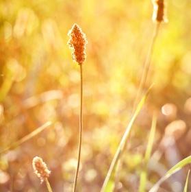 V záři ranního slunce