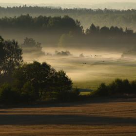 Mlhavé ptačí ráno