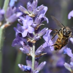 Pilná jako včela...