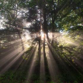 Když slunce vítězí nad mlhou