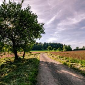 Cesta polemi