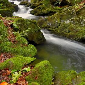 Potok Hluchová