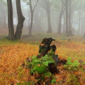Když v lese prší