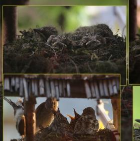 Ptačí příběh
