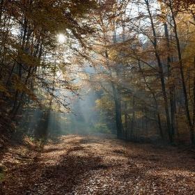 Říjen v lese