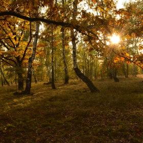 podzimní slunko v lese
