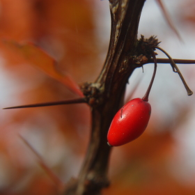 Podzimní zátiší.