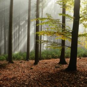 Když si slunce posvítí do lesa
