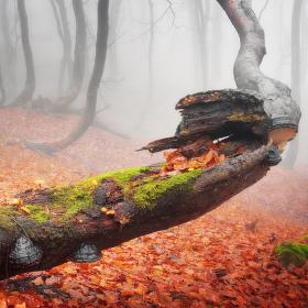 Krušnohorský podzim