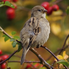 Ptačí poezie