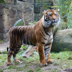 Majestátní král džungle