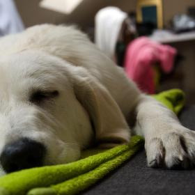 Odpolední siesta Marilyn