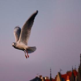 Pták v momentě