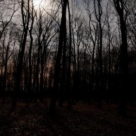 Les při úplňku