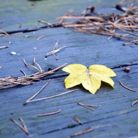 """Podzimní """"zahrádka"""""""