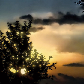 Bodláci letní noci
