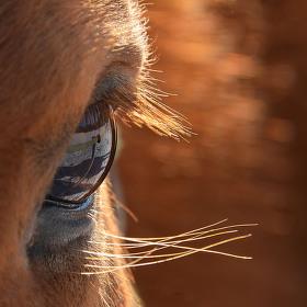 Koňská duše