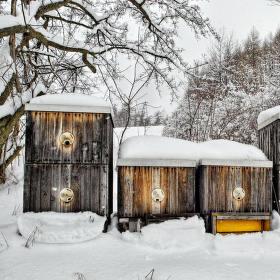 Včelky pod sněhem